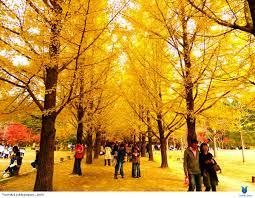 HÀN QUỐC: SEOUL - SKI RESORT - EVERLAND